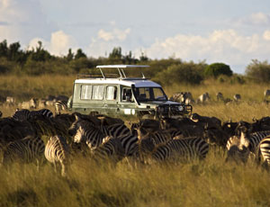 The migration i serengeti